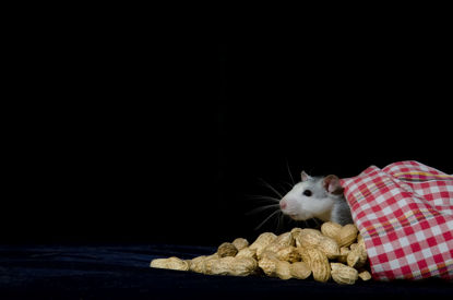 mouse beside a bag of peanuts