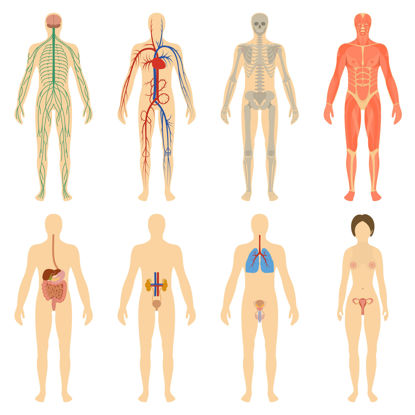 graphic of representations of human systems